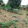 BĐS Võ Thị Sáu cần bán lô đất tại Khu CNC Hòa Lạc